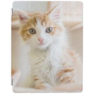 Protection iPad Chaton orange et blanc