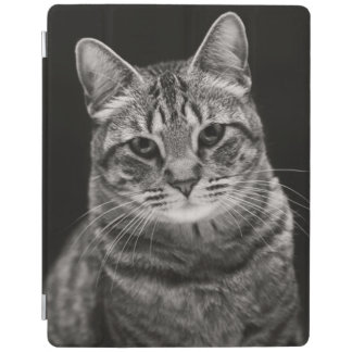 Protection iPad Chaton tigré noir