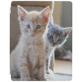 Protection iPad Chatons curieux