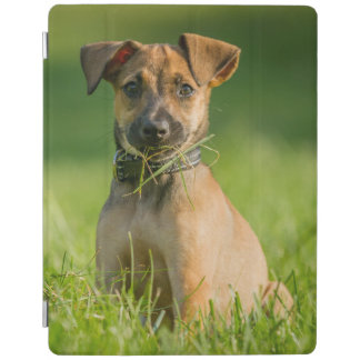 Protection iPad Chiot dans l'herbe