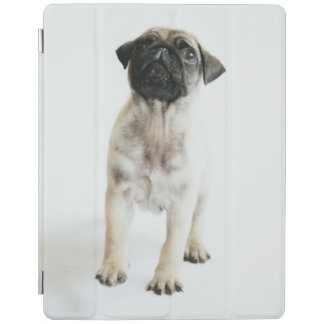 Protection iPad Chiot mignon de carlin