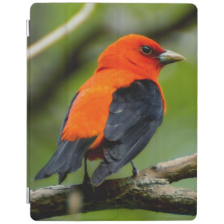 Protection iPad Couverture intelligente d'iPad de Tanager