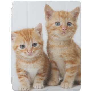 Protection iPad Deux chatons adorables