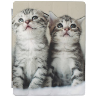 Protection iPad Deux chatons mignons