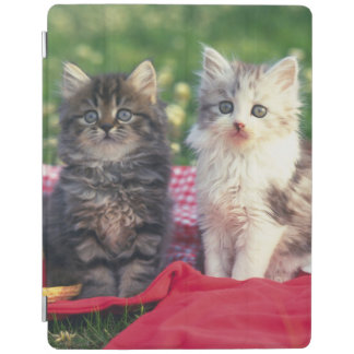 Protection iPad Deux chatons se reposant sur une couverture