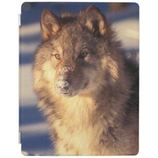 Protection iPad Loup gris dans la neige