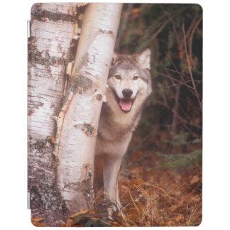 Protection iPad Loup gris derrière un arbre