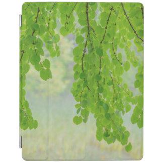 Protection iPad Membres d'arbre de Katsura dans le printemps |