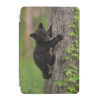 Protection iPad Mini Arbre d'escalade de CUB d'ours noir