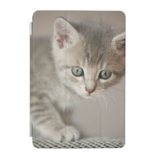 Protection iPad Mini Chaton (6 semaines)