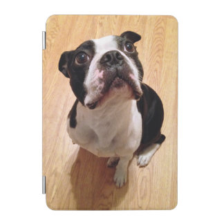Protection iPad Mini Chien de Boston Terrier
