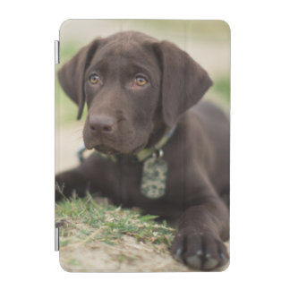 Protection iPad Mini Chiot de laboratoire de chocolat
