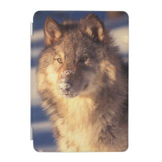 Protection iPad Mini Loup gris dans la neige