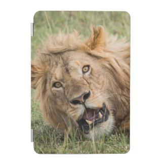 Protection iPad Mini Repos masculin de lion