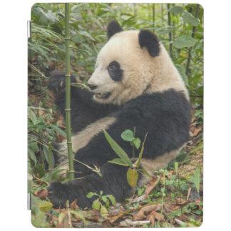 Protection iPad Panda mangeant le bambou