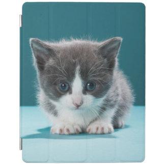 Protection iPad Petit chaton