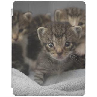 Protection iPad Photo d'un groupe de chatons câlins