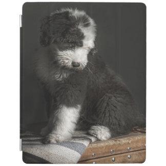 Protection iPad Portrait de chiot de queue écourtée dans le studio