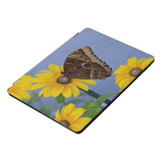 Protection iPad Pro Cover Papillon de maronnier américain sur la marguerite