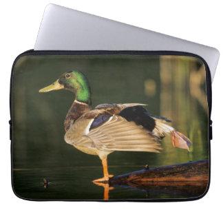 Protection Pour Ordinateur Portable Canard masculin s'étirant, l'Illinois
