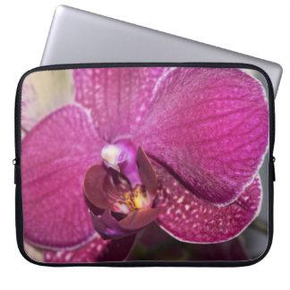 Protection Pour Ordinateur Portable Fleur pourpre