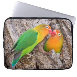 Protection Pour Ordinateur Portable Les perruches de Fischer embrassant, Afrique