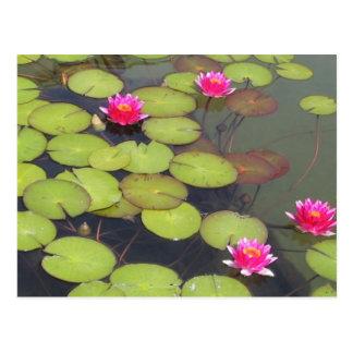 Protections de lis et carte postale de zen de