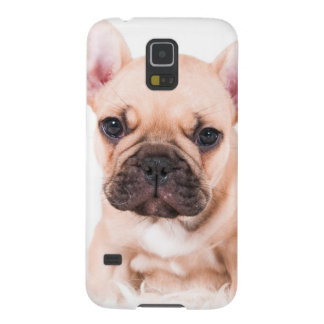 Protections Galaxy S5 Bouledogue français