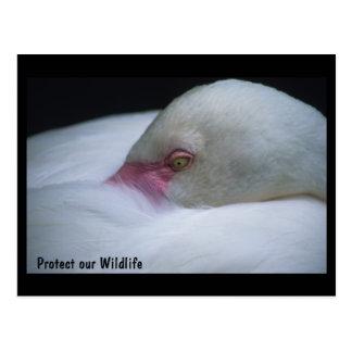 Protégez notre carte postale de flamant de faune