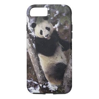 Province de l'Asie, Chine, Sichuan. Panda géant Coque iPhone 7