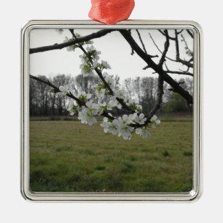Prune de floraison. Arbre blanc fleurissant au Ornement Carré Argenté