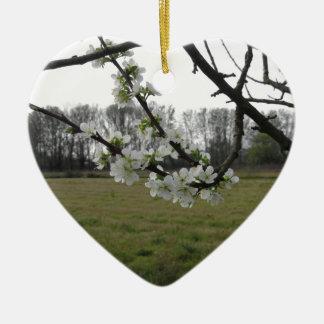 Prune de floraison. Arbre blanc fleurissant au Ornement Cœur En Céramique