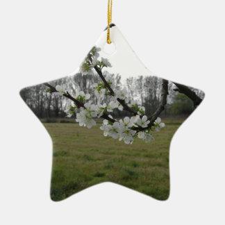 Prune de floraison. Arbre blanc fleurissant au Ornement Étoile En Céramique