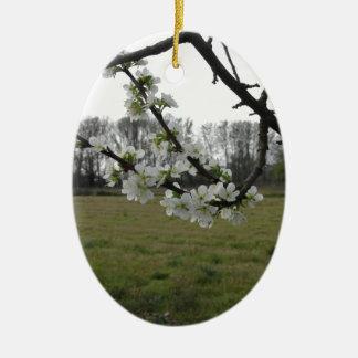 Prune de floraison. Arbre blanc fleurissant au Ornement Ovale En Céramique