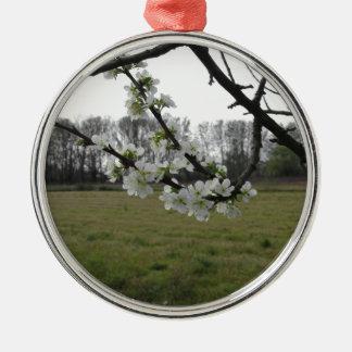Prune de floraison. Arbre blanc fleurissant au Ornement Rond Argenté