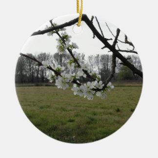 Prune de floraison. Arbre blanc fleurissant au Ornement Rond En Céramique