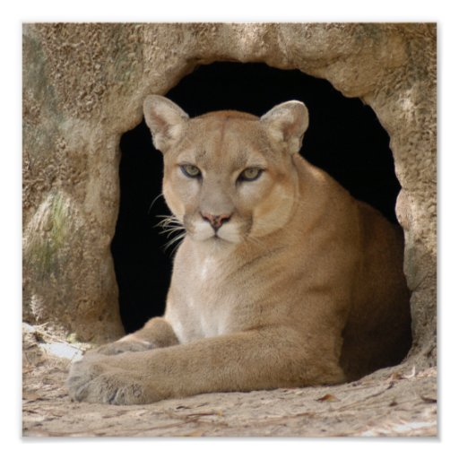 Puma 014 affiche