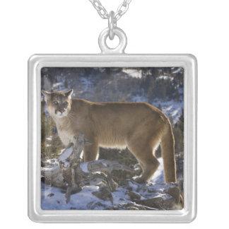 Puma, aka puma, puma ; Concolor de puma, Pendentif Carré