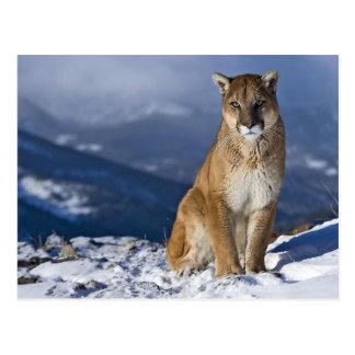 Puma dans la neige cartes postales