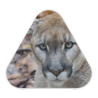 Puma puma panthère de la Floride puma 2