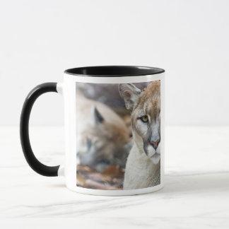 Puma, puma, panthère de la Floride, puma 2 Mug
