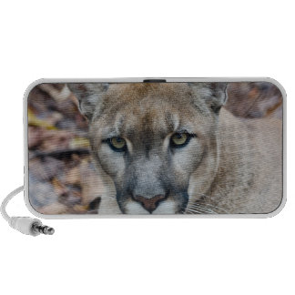 Puma, puma, panthère de la Floride, puma Haut-parleur Ordinateur Portable