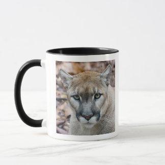 Puma, puma, panthère de la Floride, puma Mug