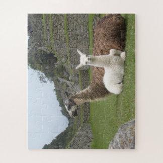 Puzzle Alpaga