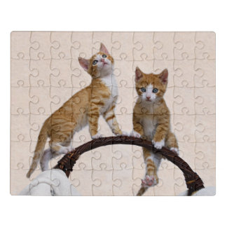 Puzzle Amoureux des chats drôle de photo de gymnase de