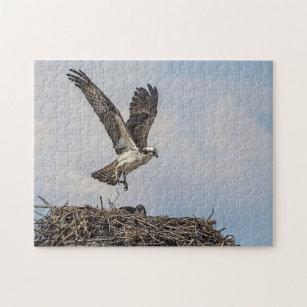 Puzzle Balbuzard dans un nid bbfd68c9337