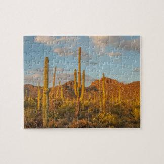 Puzzle Cactus de Saguaro au coucher du soleil, Arizona