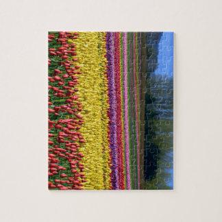 Puzzle Champ coloré de tulipe
