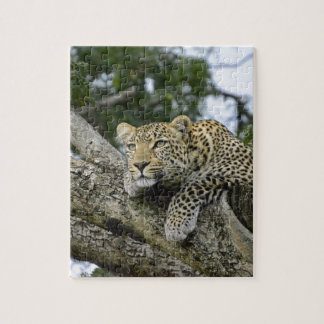Puzzle Chat sauvage animal de safari de l'Afrique d'arbre
