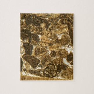 Puzzle Chaux miocène sous le microscope